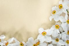 Het frame van Narcis stock foto