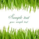 Het frame van Pasen met groen gras Royalty-vrije Stock Foto