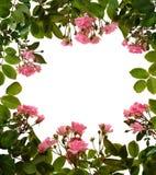 Het frame van rozen stock afbeeldingen