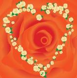 Het frame van rozen Stock Afbeelding