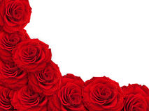 Het frame van rozen Royalty-vrije Stock Foto's