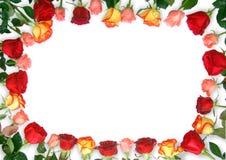 Het Frame van rozen royalty-vrije stock afbeeldingen