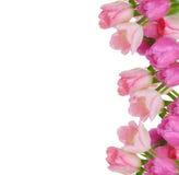 Het frame van tulpen Stock Afbeelding