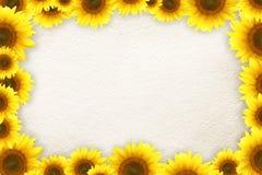 Het frame van zonnebloemen Stock Foto's