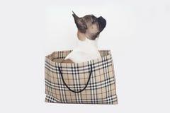 Het Franse buldogpuppy binnen het winkelen zak, isoltated stock afbeelding