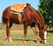 Het Franse Paard van het Zadel royalty-vrije stock fotografie