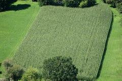 Het Franse patroon van het wijngaardgebied Royalty-vrije Stock Afbeeldingen