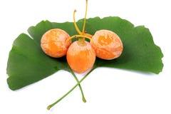 Het fruit en de bladeren van ginkgobiloba stock afbeelding