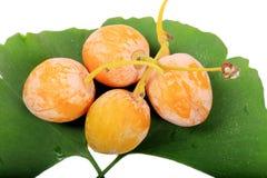 Het fruit en de bladeren van ginkgobiloba stock foto