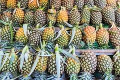 Het fruit van de ananas Stock Afbeelding
