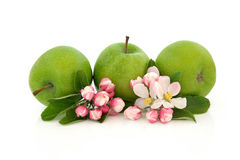 Het Fruit van de appel en de Bloesem van de Bloem Stock Foto's