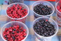 Het fruit van de bosbes en van de Amerikaanse veenbes Royalty-vrije Stock Foto