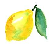 Het fruit van de citroen Stock Afbeeldingen