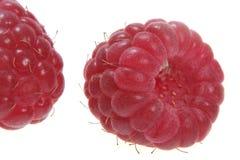 Het fruit van de framboos stock foto's
