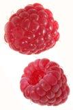 Het fruit van de framboos Stock Foto
