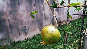 Het fruit van de granaatappel Royalty-vrije Stock Afbeelding