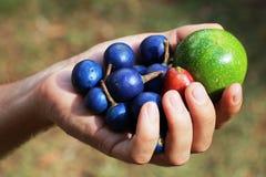 Het fruit van de handholding Stock Fotografie