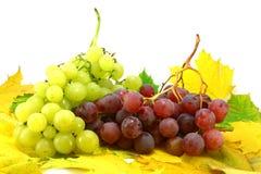 Het fruit van de herfst stock fotografie