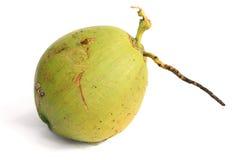 Het Fruit van de kokosnoot Stock Fotografie