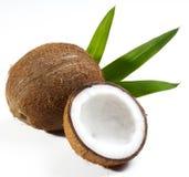 Het fruit van de kokosnoot Royalty-vrije Stock Foto