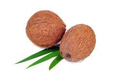 Het fruit van de kokosnoot dat op wit wordt geïsoleerda Royalty-vrije Stock Afbeelding