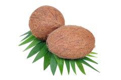 Het fruit van de kokosnoot dat op wit wordt geïsoleerde Royalty-vrije Stock Afbeeldingen