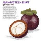 Het fruit van de mangostan Stock Afbeelding