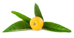 Het fruit van de Mispel van Loquat Royalty-vrije Stock Afbeeldingen