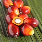 Het fruit van de oliepalm Stock Afbeelding