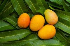 Het fruit van de oogstmango op tropische groene bladachtergrond royalty-vrije stock fotografie