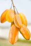 Het fruit van de sterappel Royalty-vrije Stock Foto