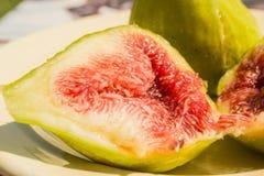 Het fruit van de vijgeboom Royalty-vrije Stock Afbeelding