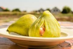 Het fruit van de vijgeboom Royalty-vrije Stock Foto's
