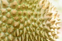 Het fruit van Durian Royalty-vrije Stock Afbeelding