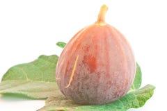 Het fruit van fig. Royalty-vrije Stock Foto