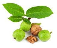 Het fruit van groene en rijpe okkernoot stock fotografie