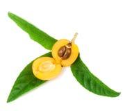 Het fruit van Loquat Royalty-vrije Stock Afbeeldingen