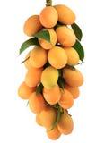Het Fruit van Maprang, Thais Fruit stock fotografie