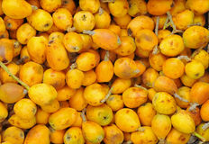Het fruit van Marula royalty-vrije stock afbeelding