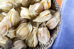 Het Fruit van Physalis in Mand Stock Foto