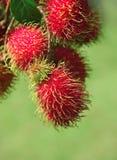 Het fruit van Rambutans stock foto