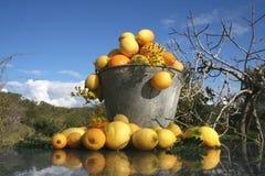 Het fruitemmer van de zomer Stock Afbeeldingen