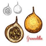 Het fruitpictogram van de Grenadilla vector exotisch schets vector illustratie