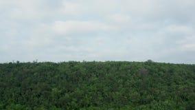 Het gaan onderaan antenne van een dicht bos wordt geschoten dat stock footage