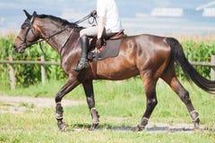 Het galopperende paard van de ruiter Stock Afbeelding