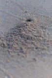Het gat van de krab op het strand Stock Foto's
