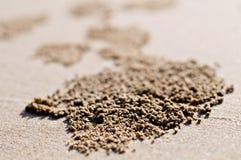 Het gat van de krab op strand Royalty-vrije Stock Foto's