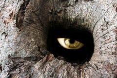 Het gatenoog van de boom Stock Afbeeldingen