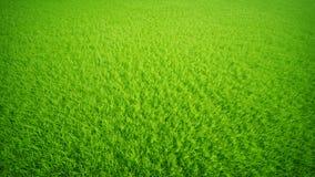 Het gazon van het gras. Stock Afbeelding