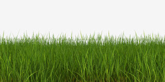 Het gazon van het gras Royalty-vrije Stock Fotografie